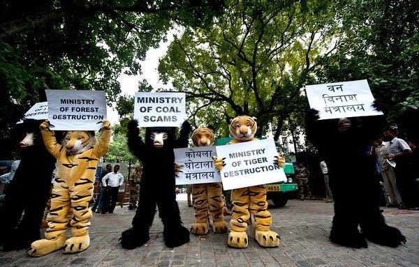 Des militants de Greenpeace en Inde