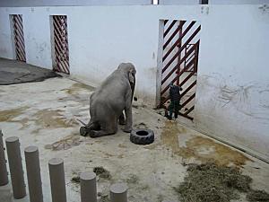 TANIA dans le zoo Tirgu-Mures en Roumanie