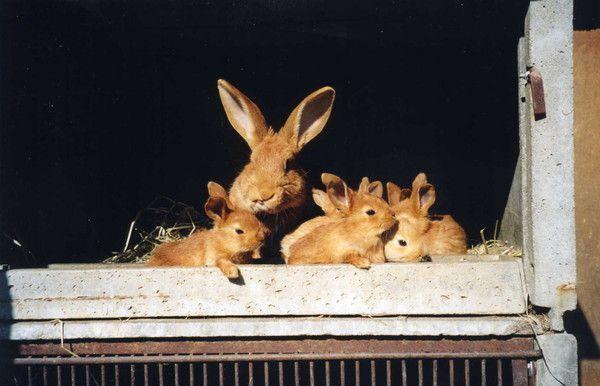 Prof condamné à 8 mois prison, avait tué 2 lapins en classe