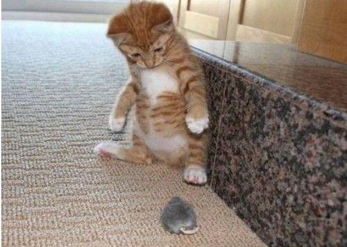 chat thiais