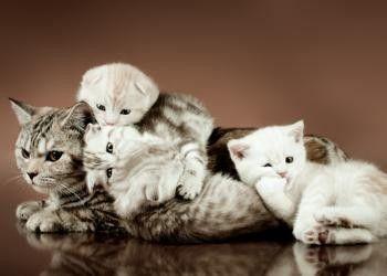 New Yorkais sauve famille de chats de l'ouragan Sandy