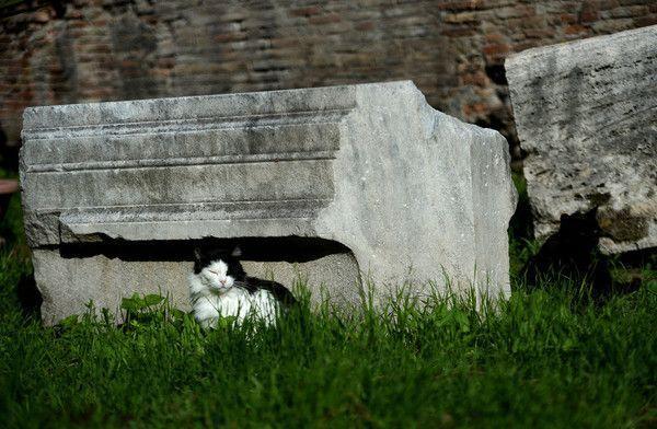 Des chats sèment la zizanie dans les ruines de Rome