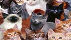 Contre la mort lente des chats d'Orpéa