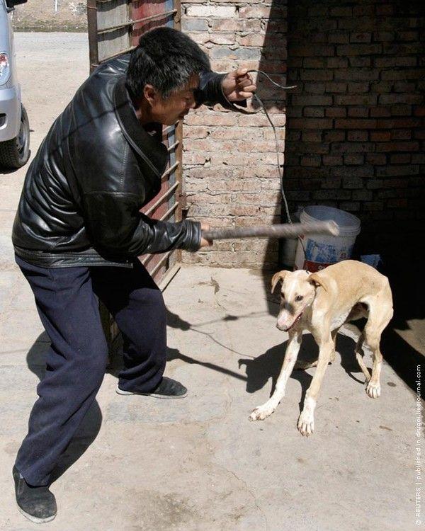 Hunde In China Lebendig Gekocht