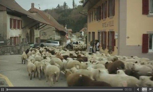 Carole, Pascal et leurs mille moutons blancs